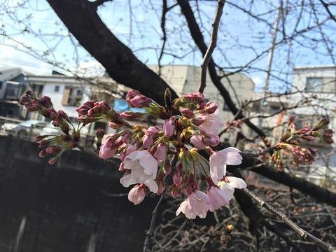 写真 2017-03-23 14 39 02 (1)