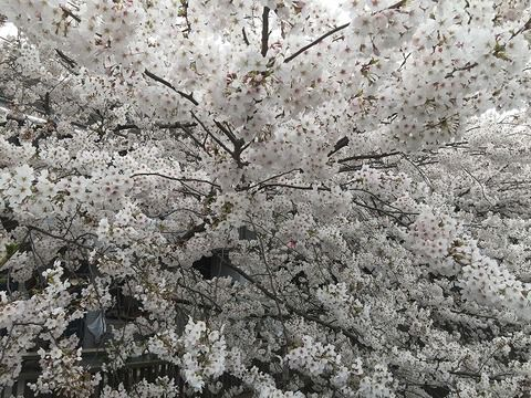 写真 2018-03-27 14 12 51