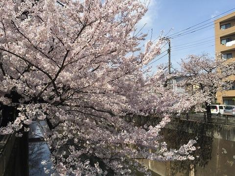 写真 2017-04-06 10 52 40