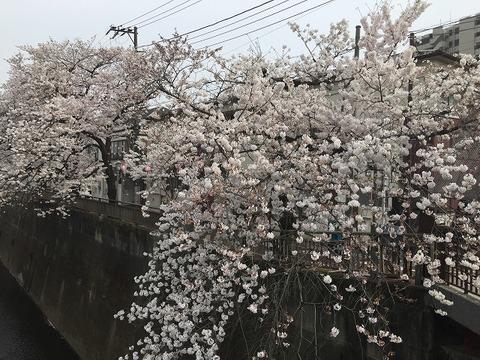 写真 2018-03-27 14 05 48