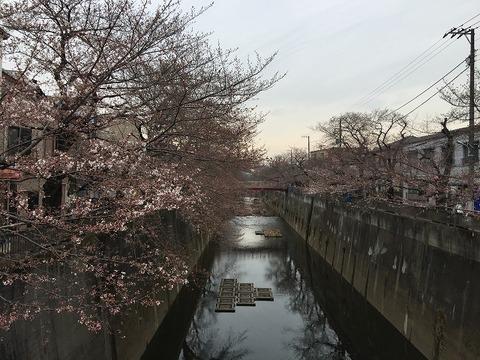 写真 2018-03-19 14 14 29